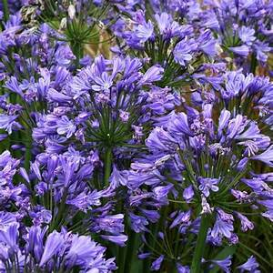 plante facile d39entretien liste ooreka With tapis champ de fleurs avec canapé gonflable extérieur