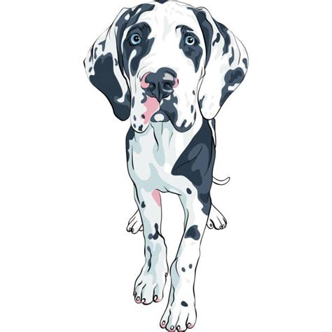 How to convert a svg file. Great Dane Illustrations, Royalty-Free Vector Graphics ...