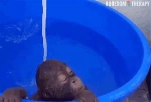 A Baby Orangutan Enjoys A Peacful Shower Outside.
