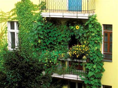 balkon sichtschutz mit pflanzen sichtschutz f 252 r balkon und garten 4