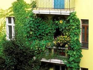 sichtschutz fur balkon und garten 4 With französischer balkon mit pflanzen für garten winterhart