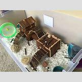 Robo Dwarf Hamster Cages | 1136 x 852 jpeg 154kB