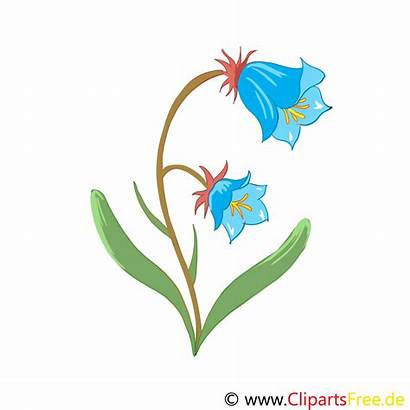 Grafik Clip Glockenblume Clipart Kostenlos Bild Bluebell