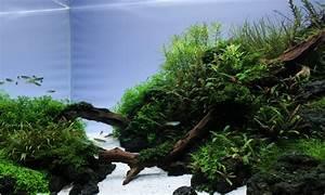 Co2 Rechner Aquarium : wieso ist kohlendioxid co2 der wichtigste pflanzenn hrstoff im aquarium ~ A.2002-acura-tl-radio.info Haus und Dekorationen