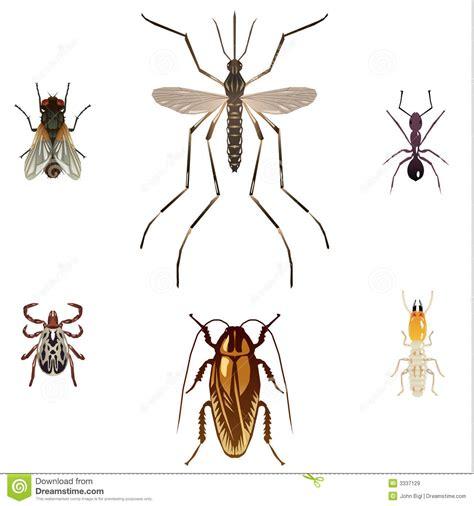 5 Insectes De Parasite Illustration De Vecteur Illustration Du Moustique 3337129