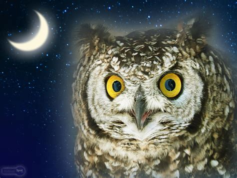 Owl Wallpapers by Owl Wallpapers Animal Spot