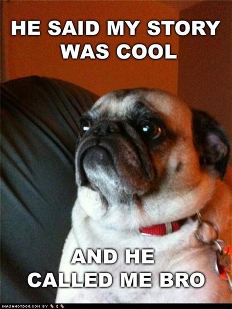 Funny Pug Memes - funny pug dog pictures 35 pics