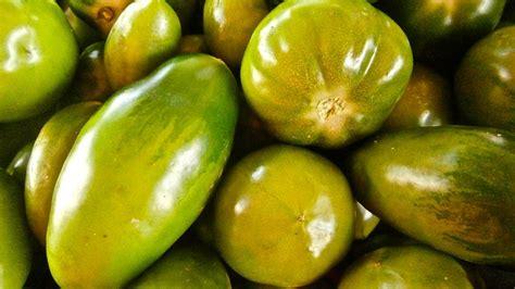 cuisiner les tomates vertes les tomates vertes mûres pas mûres variétés et