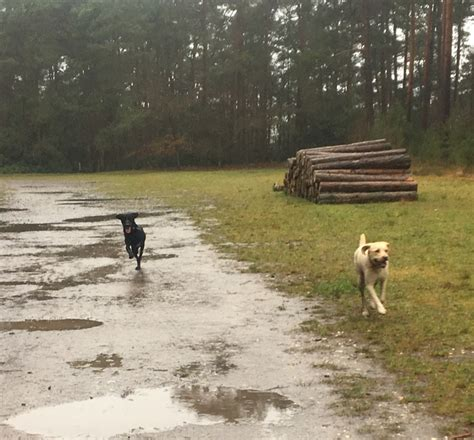 walk dog farnham woodland near surrey wet rain bit parts some after