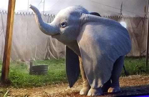 finley hobbins dumbo first look at dumbo from tim burton s live action movie