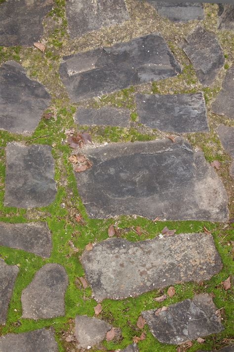 stone path pavers and moss background | Free Textures ...