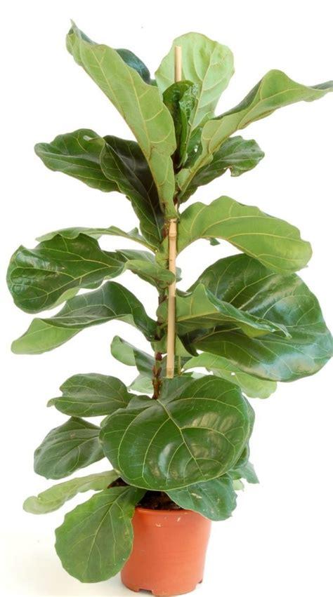 tapis chambre fille ikea grande plante verte d interieur atlub com