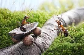 Anti Fourmi Naturel : r pulsif naturel anti fourmis les astuces de grand m re ~ Carolinahurricanesstore.com Idées de Décoration