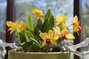 Dünger Für Orchideen : orchideen richtig d ngen mein sch ner garten ~ Eleganceandgraceweddings.com Haus und Dekorationen
