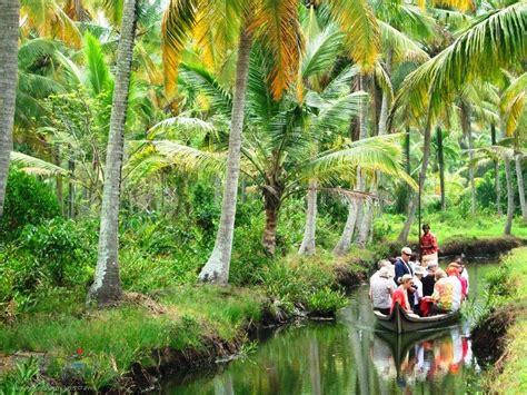 coconut island nostalgic kerala coconut country