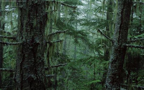 wallpaper collections rainforest wallpaper