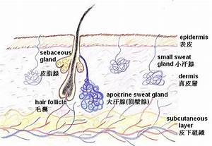 Treating Focal Sweating Problems By Chinese Methods