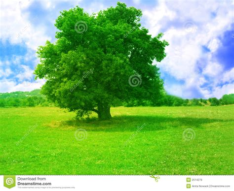 Tree Of Images Green Tree Stock Image Image Of Ecosystem Field