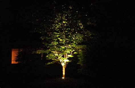 outdoor lighting for trees low voltage landscape lighting trees
