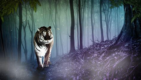 white tiger walking through woods at night Art - ID: 88548 ...