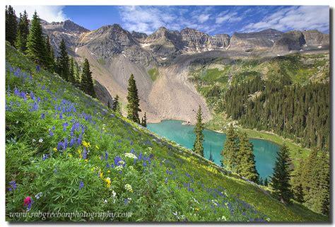 Colorado Mountain Wildflowers Lake