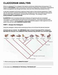 Cladogram Analysis