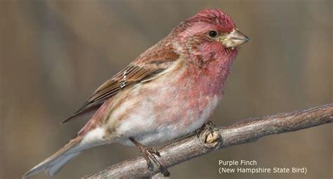 new hshire wild birds wild bird bird feeding watching
