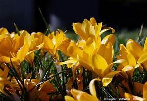Garten Was Tun Im März : gartentipps m rz das k nnen sie jetzt tun garten hausxxl garten hausxxl ~ Markanthonyermac.com Haus und Dekorationen