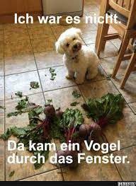 bildergebnis fuer lustige hunde bilder mit spruch humor
