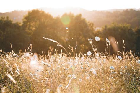 meadow pictures   images  unsplash