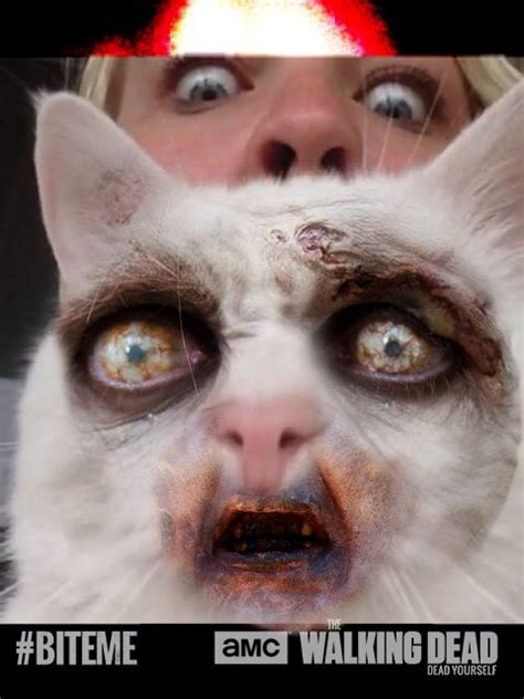 Zombie Grumpy Cat  Halloween Pinterest