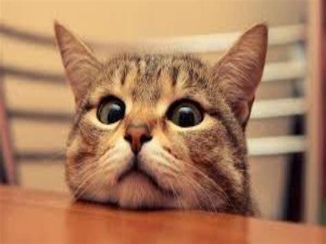 kitty cats cat