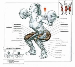 Biomechanics Of Front  U0026 Back Squats