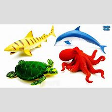 Learn Sea Animals Names For Kidslearn Ocean Animals Names & Sounds Water Animal Hidewater