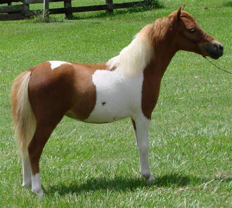horses miniature