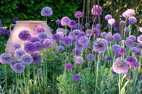 bulb planting ideas spring combination ideas bulb combinations plant combinations flowerbeds ideas spring