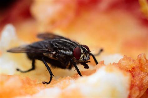 Gegen Fliegen by Fliegen Vertreiben Die Besten Hausmittel Gegen