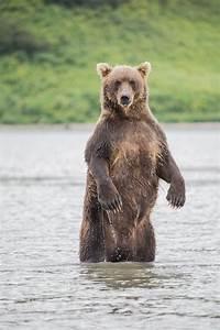 2  U0026 39 Really Odd U0026 39  Fatal Black Bear Attacks Concern Wildlife