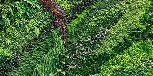 Indoor Green Wall Plants Home Decor ~ Clipgoo