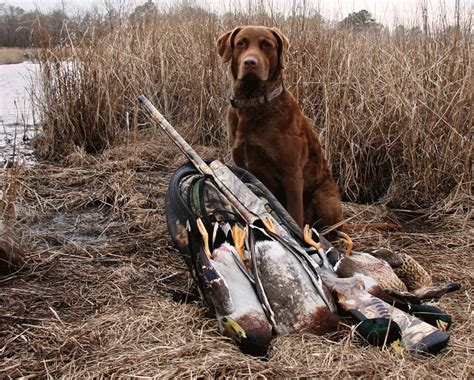 duck hunting dog breeds outdoor enthusiast
