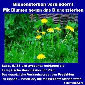 Welche Blumen Für Bienen : mit blumen gegen das bienensterben netzfrauen ~ Eleganceandgraceweddings.com Haus und Dekorationen