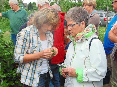 Schwanau Gegen Läuse, Flöhe Und Pilze Im Garten