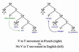 English Questions And Negation With  Do  In Syntax