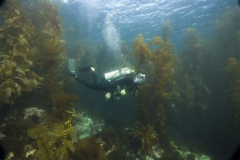 Dive Boats Catalina Island by Tours Scuba Diving Catalina Island