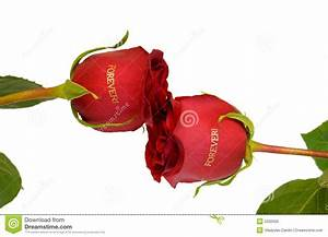 Roses Of Friendship Royalty Free Stock Photo - Image: 5032005