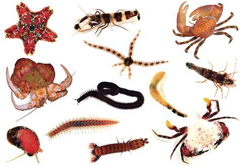 Berikut Ini Soal Biologi Tenang Hewan Invertebrata Beserta ...
