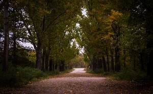 Free, Images, Landscape, Tree, Nature, Forest, Path, Pathway, Light, Wood, Sunset, Road, Trail