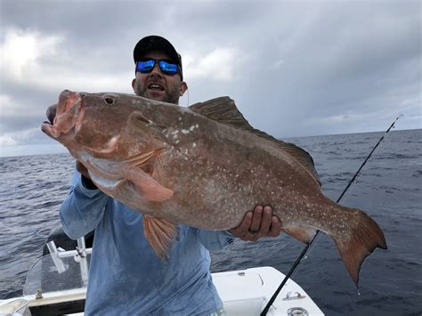grouper fishing sea deep middle clearwater grounds fish report inshore fl trip water sportfishing goliath trips