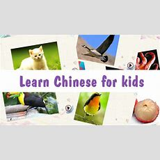 Chinese And English Vocabulary Audio And Pictorial Flashcards For Kids Ipa Cracked For Ios Free