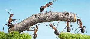Was Mögen Ameisen Nicht : ameisen bek mpfen im garten auf dem rasen und im haus garten ratgeber ~ Orissabook.com Haus und Dekorationen
